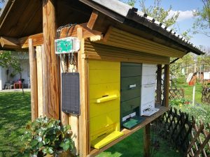 Beehive scale will make you see that the weight of natural hives can differ based on their size