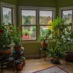 How do you test the lighting and temperature requirements of your indoor plants?